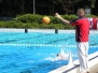Sasse Zwemweek - Polotoernooi